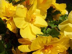 Blumengruß am Morgen - floroj salutas matene