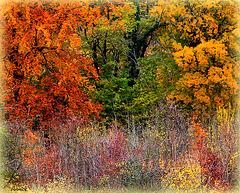 November's Autumn