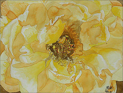 2012-09-10 Bouton-jaune web
