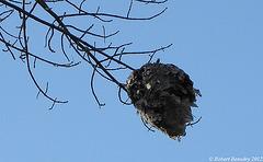 Le nid original