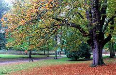 la nature revêt ses plus belles couleurs d'automne