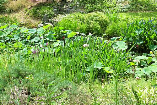 Au jardin Zen de Beaumont-Monteux 26