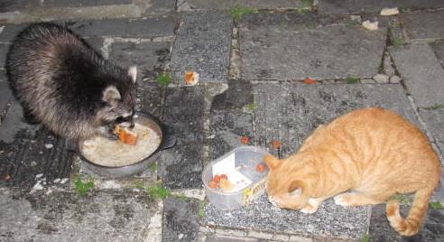 IMG 1261 1 le chat et le raton