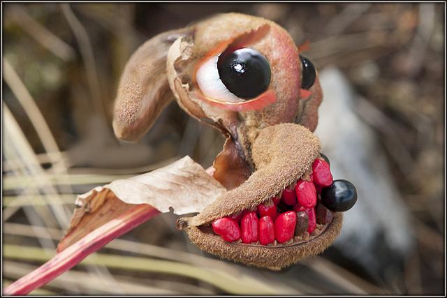 Erythrina caffra [Identification] 13808788.1938b950.640