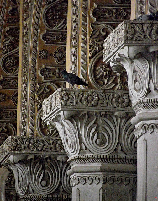 Pigeon on a pillar