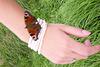 La cueillette des papillons