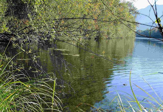 am alten Rhein