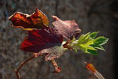Au revoir l'été et bonjour l'automne