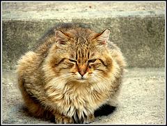 Amours de chat-tes .....