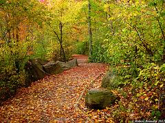Le sentier de feuilles