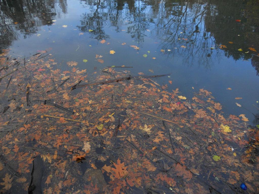 feuilles d'automne cherchent ciel bleu