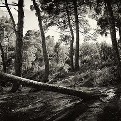Der Wald - das besondere Wesen