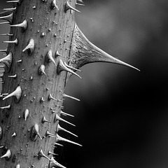 Thorn 6