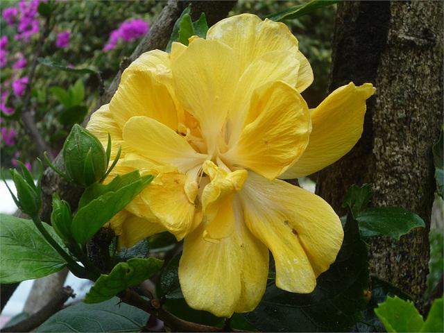 Flor tica amarilla 2