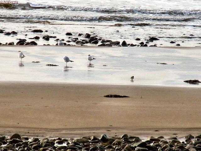 04 gulls