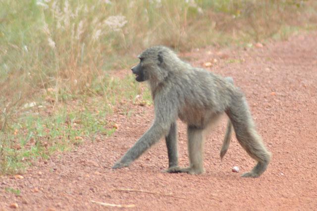 Bela juna specimeno... kaj fino de la ekskurso. Mi dormos la tutan vojon reen al Kigali