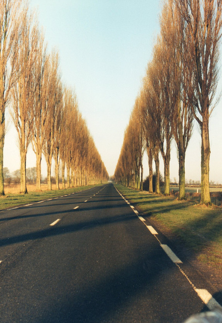 A long avenue of trees in France