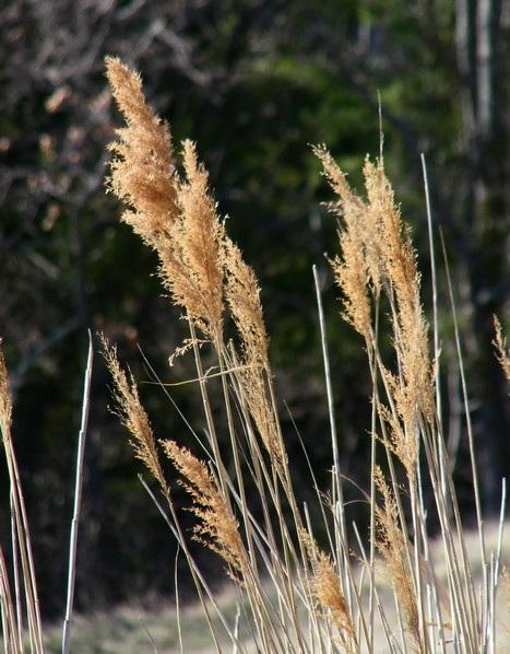 Herbes séches