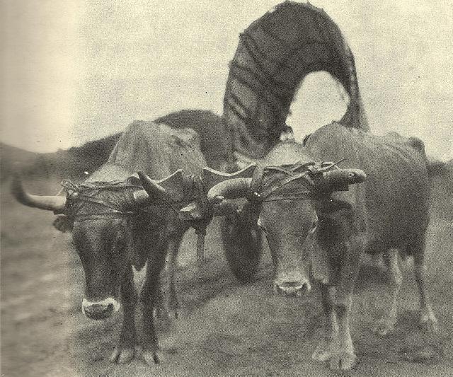Der Karren, Traven-foto