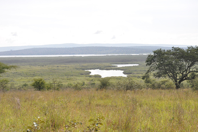Savano. Pejzaĝo tute malsimila al la okcidenta kaj centra Ruando. La foraj montoj estas Tanzanio