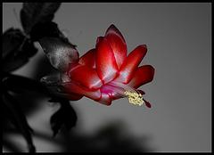 Fleur-passion....la passion des fleurs