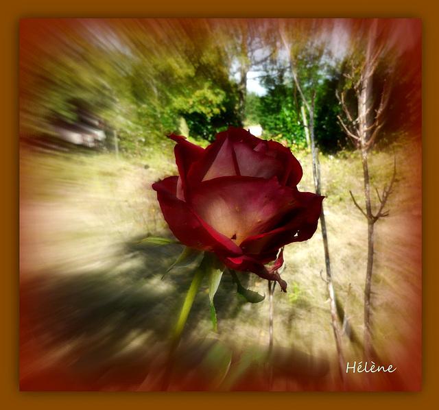 une rose pour vous tous qui venez me voir !!!!