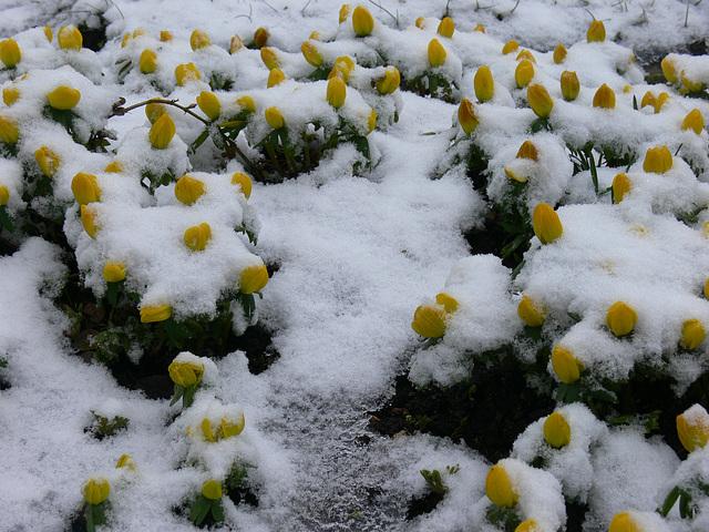 eine Decke aus Schnee