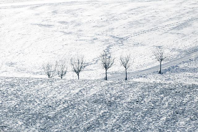 Bäume - 121208