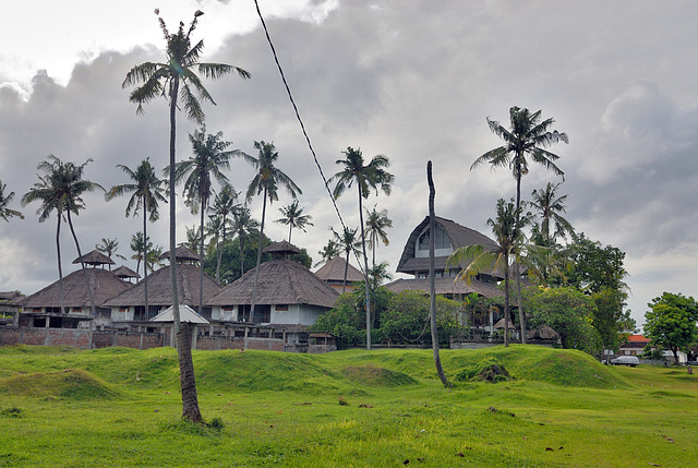 Asian palm weevil destroys many trees on Bali