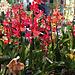 orkideoj