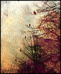 birds in line