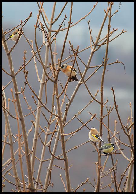 Arbre aux oiseaux
