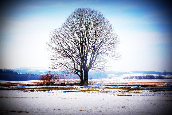 Alter Baum - maljuna arbo - old tree - vieux arbre