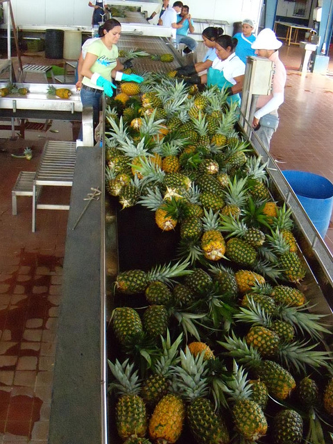 13. UNWANTED PINEAPPLES GO TO THE WHITE BELT