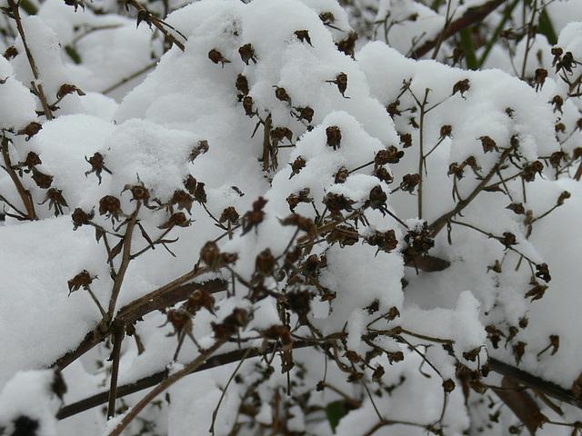 Sträucher im Schnee