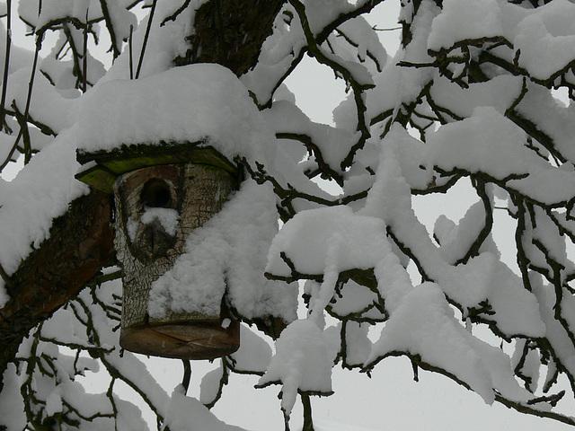 Vogelvilla im Schneebaum