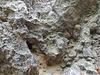 Gipsfelsen am Bodengeopfad