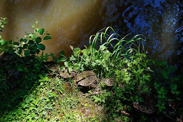 Bord d'étang sous le soleil