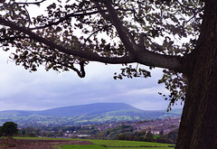 Pendle view.