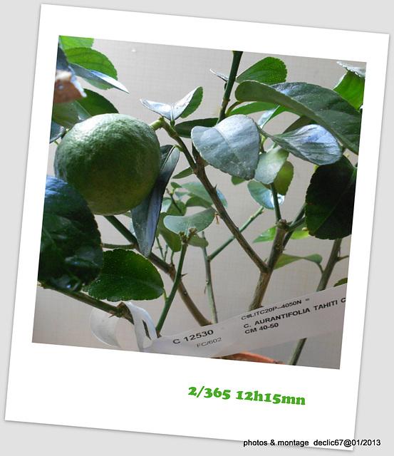 02.01................................lime devant sa fenêtre