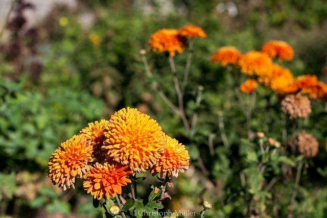 Blumen im Garten ...