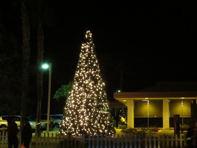 DHS Christmas Tree Lighting (1383)