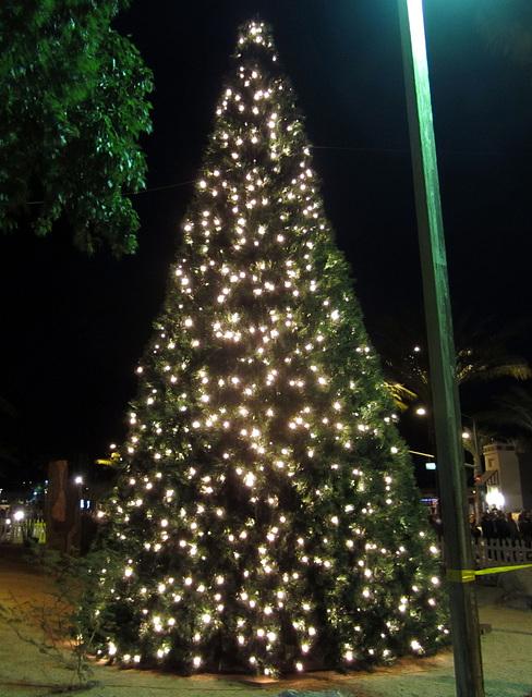 DHS Christmas Tree Lighting (1389)