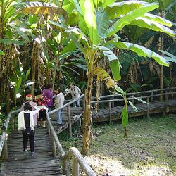 Jungle 01