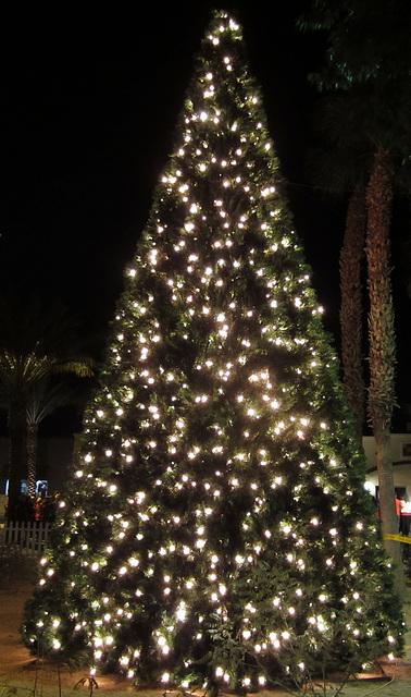 DHS Christmas Tree Lighting (1390)