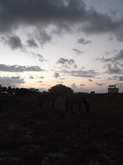 Chevaux levants / Rising horses / Caballos al amanecer - 21 avril 2012 / Photo originale.