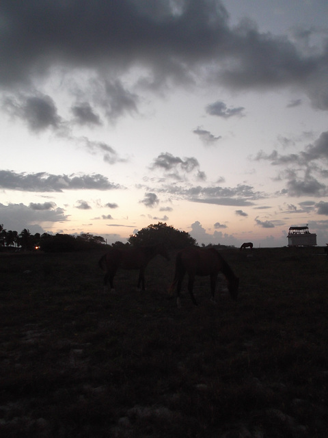 Chevaux levants / Rising horses / Caballos al amanecer - 21 avril 2012 / Photo originale.