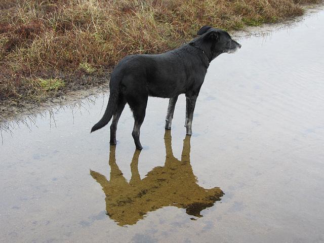 Lara hat nasse Füße!