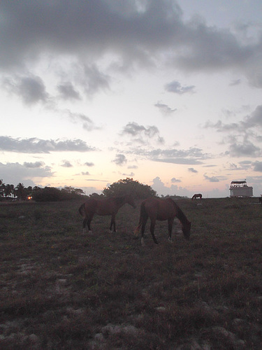 ip ok Chevaux levants - Rising horses 21 avril 2012 DSCF135100000000