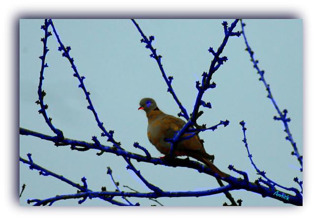 harmonie en bleu pour changer